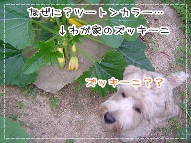 2011615007.jpg