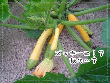 201161501.jpg