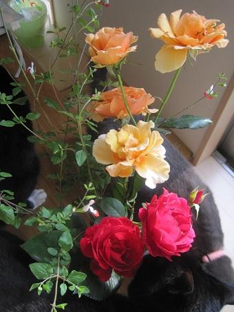 20100608バラと猫たち3