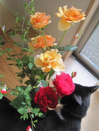 20100608バラと猫たち1