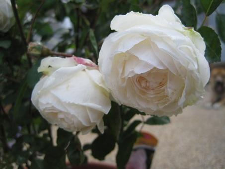 20100515粉粧楼2