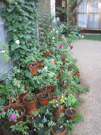 201009月の庭