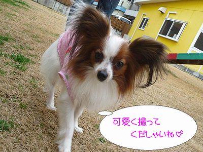 blog227P1040199.jpg