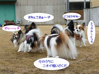 blog227P1040215.jpg