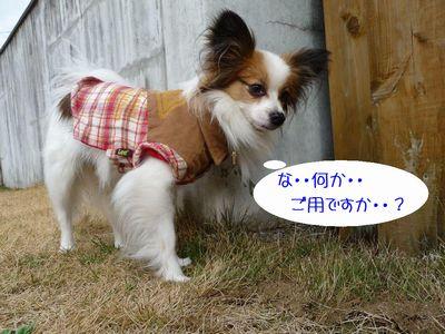 blog227P1040217.jpg