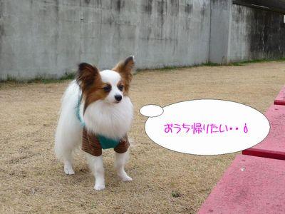 blog227P1040220.jpg
