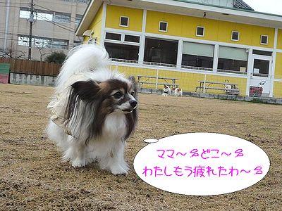 blog227P1040227.jpg