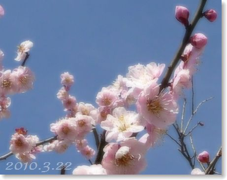 blogP1040338.jpg