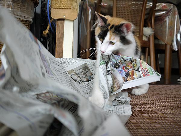 新聞ガブガブ