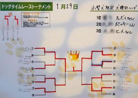 20110129_小型犬限定戦トーナメント表
