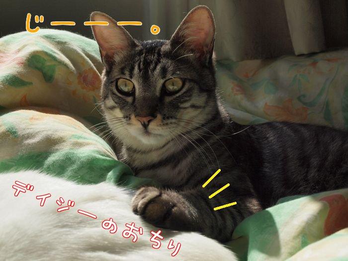 ivy&daisygiwaku20110424 (5)