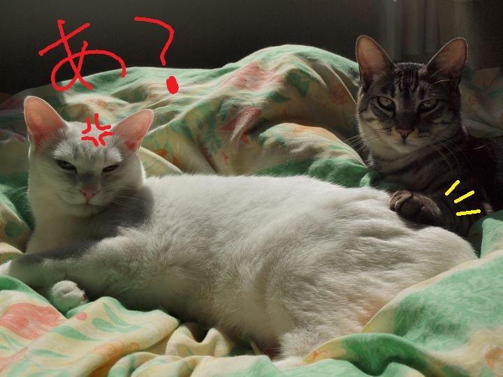 ivy&daisygiwaku20110424 (4)