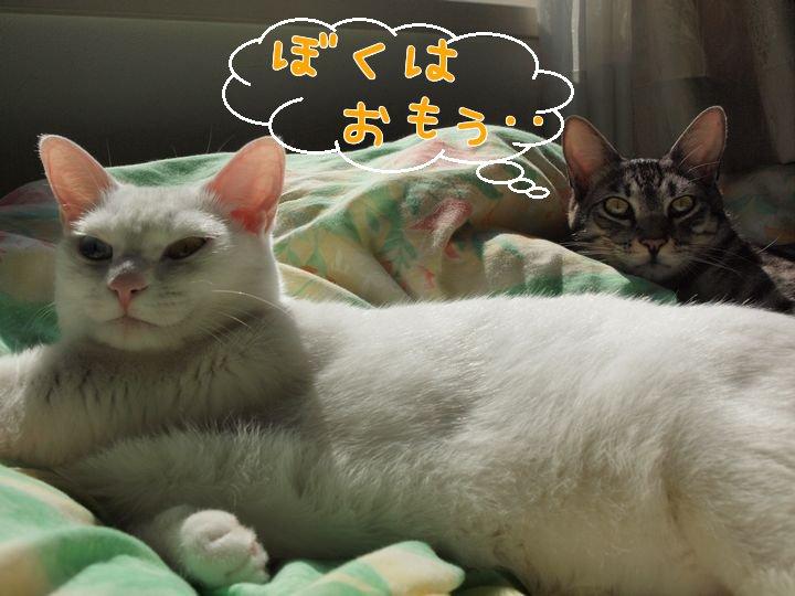 ivy&daisygiwaku20110424 (2)