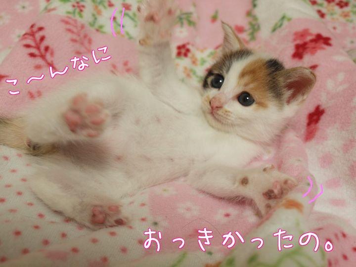 kuukairikusatooya20110505 (1)
