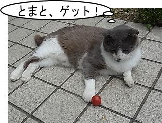 トマトゲット
