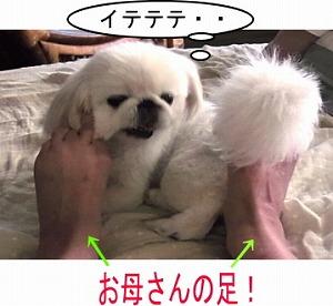 お母さんの足