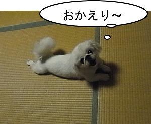 おかえり~①