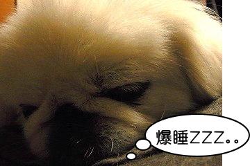 爆睡・・・