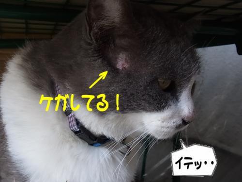 繧ア繧ャ_convert_20111120185411