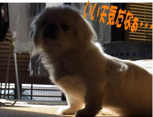 豢玲ソッ繧ゅ・_convert_20111120191221