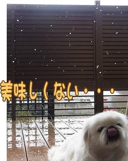 雪ってうまい