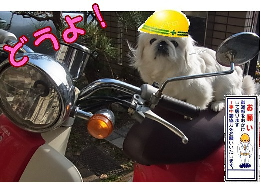 まめのバイク