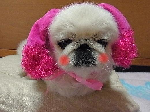 ピンクのお耳
