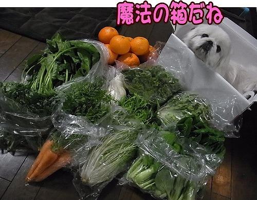 野菜とまめ