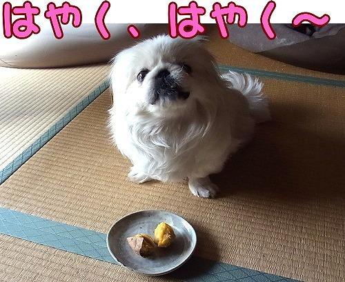 食べていいですか