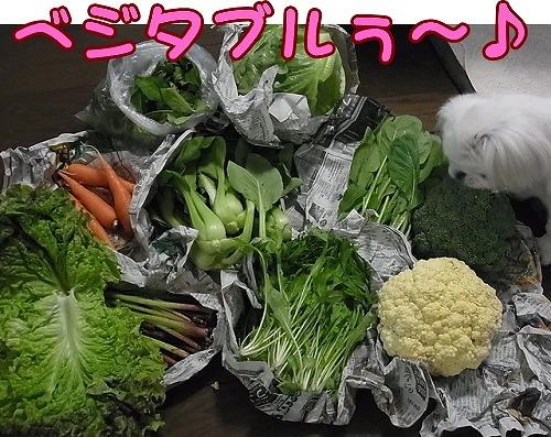 野菜たちです