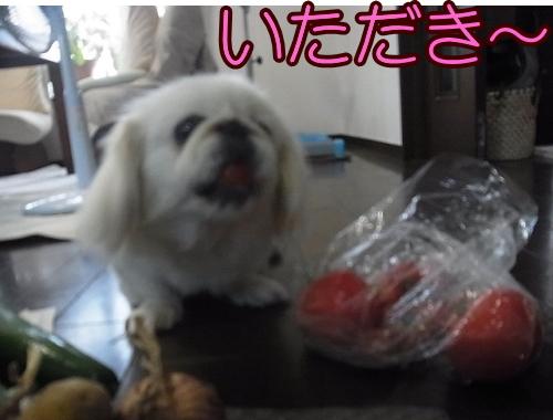 トマト食べたよ