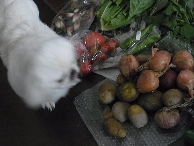 野菜です④
