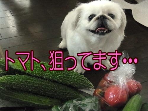 野菜です③