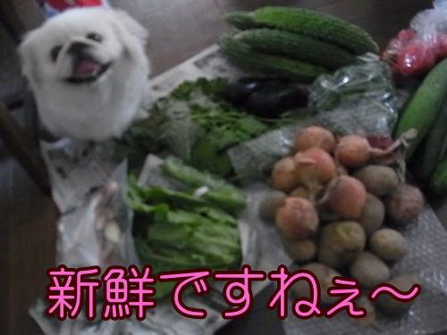 野菜です②