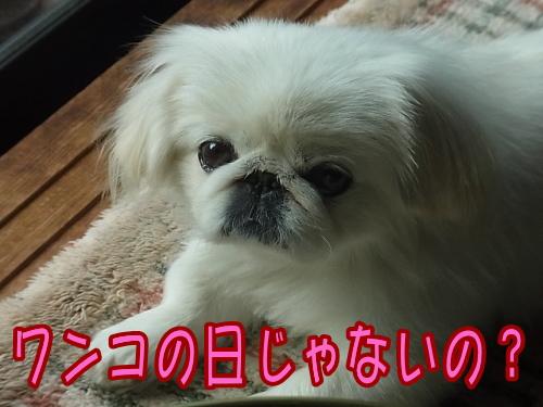RIMG0007_20121112014801.jpg