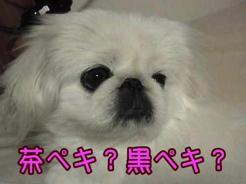 RIMG0008_20121215011237.jpg