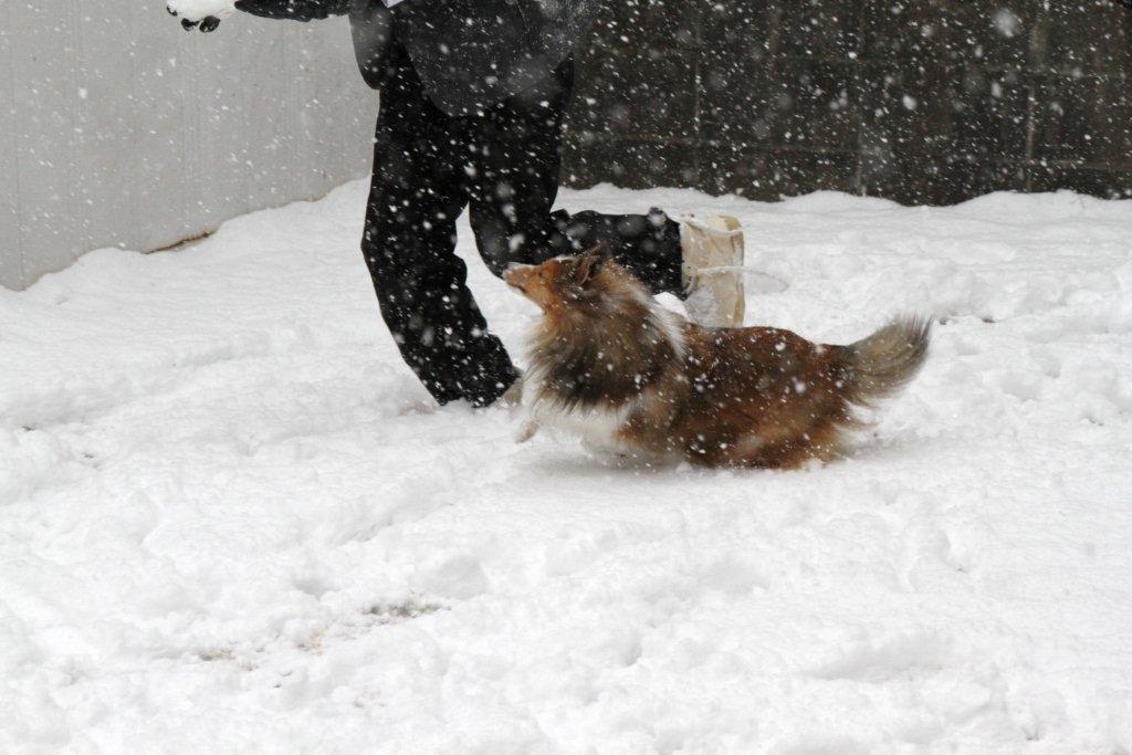 留美も雪だらけだけど、カメラ ...