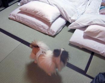 20101103旅行1-おやすみなさい