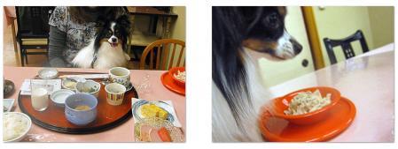 20101104朝食テンテン-2