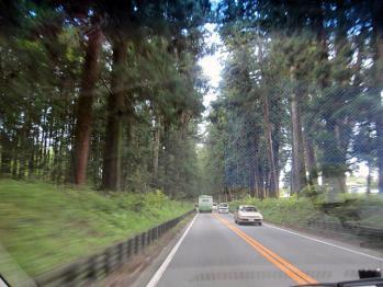 20101105杉林
