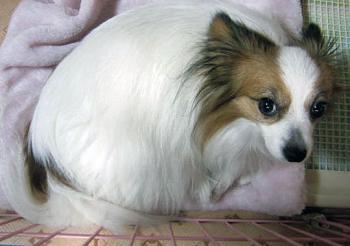 20101204ピョンふて寝
