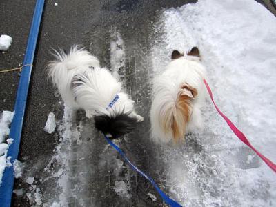 20110117雪道の散歩-1