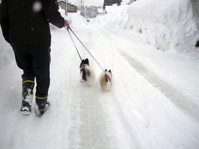 20110131雪道のおさんぽ-1