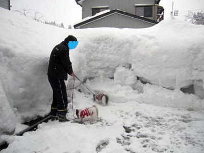 20110131大雪-2