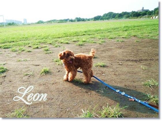 leon-1-e-1.jpg