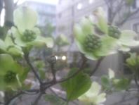 414hanamizuki.jpg