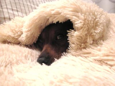アクア、ぬくぬく寝たふりしながらゴハン待ち。