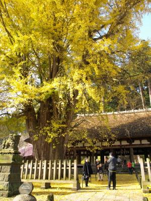 長床の黄葉