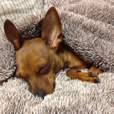 寝袋布団で、ぬくぬくアクア
