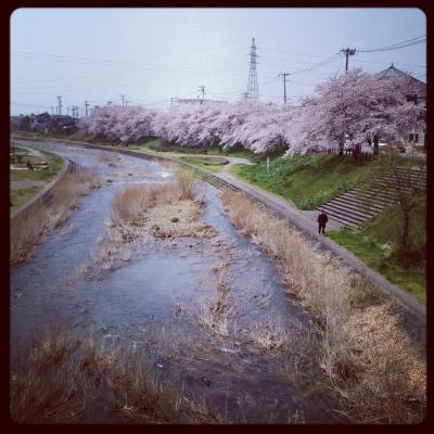 湯川いこいの河畔公園の桜並木_2012/04/25